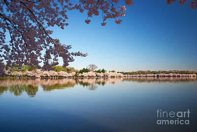 Cherry Blossoms Photograph - Cherry Blossoms Along The Tidal Basin by Susan Isakson