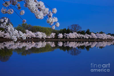 Photograph - Cherry Blossoms And The Tidal Basin by Brian Jannsen