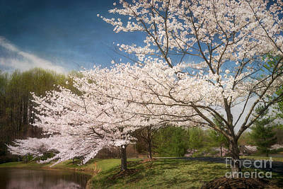 Meadowlark Photograph - Cherry Blossoms At Meadowlark Three by Susan Isakson