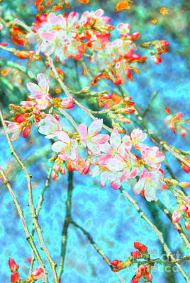 Browm Digital Art - Cherry Blossoms by Eva Kaufman