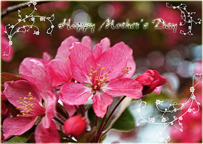 Photograph - Cherry Blossoms Greeting Card Mothers Day by Debbie Portwood