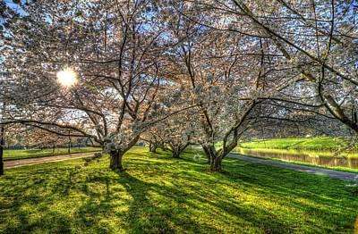 Ou. Ohio University Photograph - Cherry Blossoms  by Shirley Tinkham