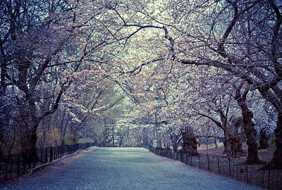 Cherry Blossoms Photograph - Cherry Blossoms Trees by Vivienne Gucwa