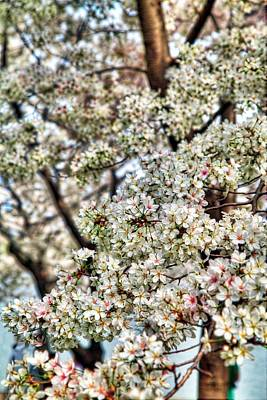 Tidal Photograph - Cherry Blossoms Washington Dc 2 by Metro DC Photography