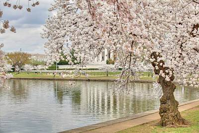Photograph - Cherry Blossoms Washington Dc 6 by Metro DC Photography