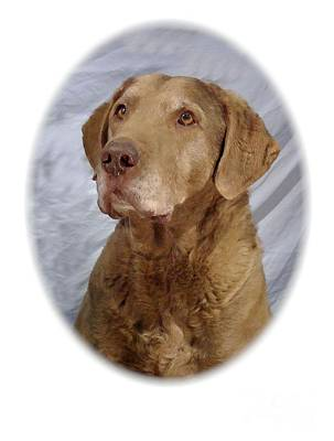 Retriever Digital Art - Chesapeake Bay Retriever 787 by Larry Matthews