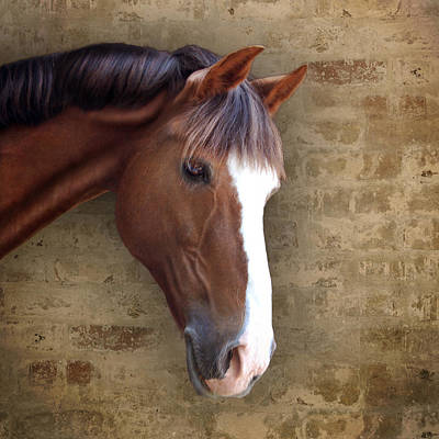 Photograph - Chestnut Pony Portrait by Ethiriel  Photography