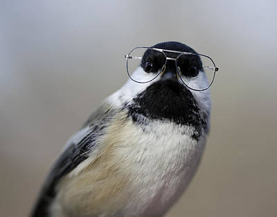 Chickadee Wearing Glasses Art Print by Www.sharp-photo.com