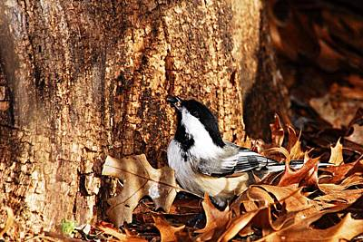 Chickadee With Sunflower Seed Print by Larry Ricker