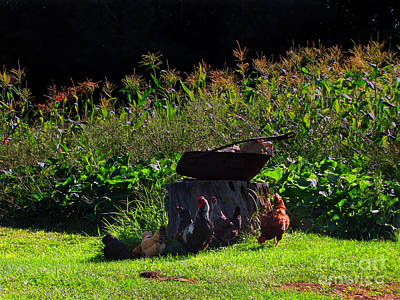 Photograph - Chickens Of The Corn by Ms Judi