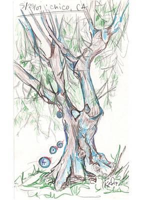 Drawing - Chico Ca River Tree by Carol Rashawnna Williams