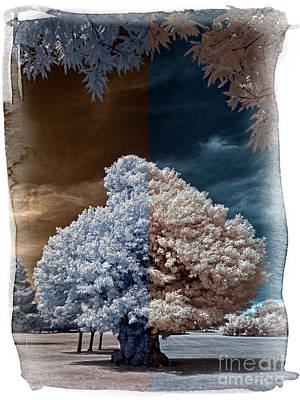 Childhood Oak Tree - Infrared Photography Art Print by Steven Cragg