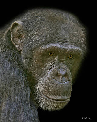 Chimpanzee Portrait Art Print by Larry Linton
