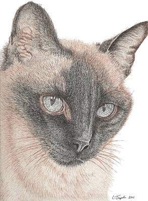 Drawing - Chin Shu by Lawrence Tripoli