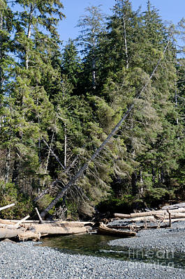 China Creek China Beach Juan De Fuca Provincial Park Bc Canada Print by Andy Smy