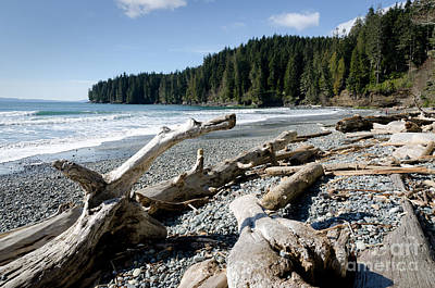 China Driftwood China Beach Juan De Fuca Provincial Park Bc Print by Andy Smy