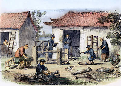 Ching Dynasty Photograph - China: Silk Industry, 1857 by Granger