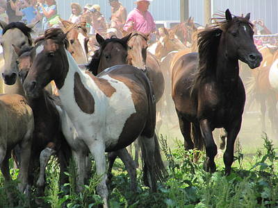 Photograph - Chincoteague Roundup by Richard Reeve