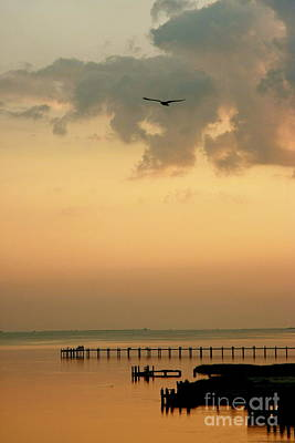 Art Print featuring the photograph Chincoteaque Island by Nicola Fiscarelli