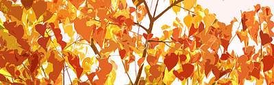 Chinese Tallow In Fall Original by Phill Petrovic