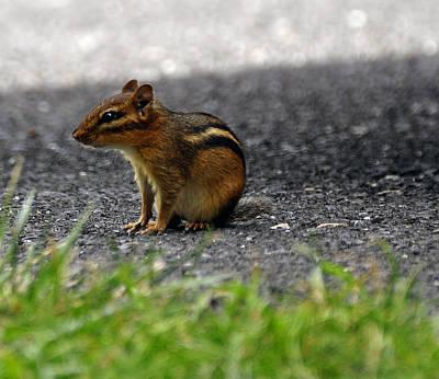 Photograph - Chipmunk by Helen Haw