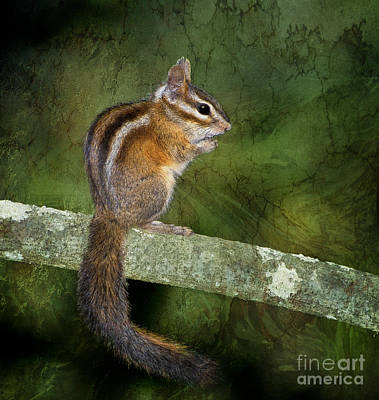 Chipmunk In The Forest Art Print