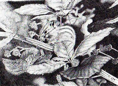 Drawing - Chipmunk by Inger Hutton