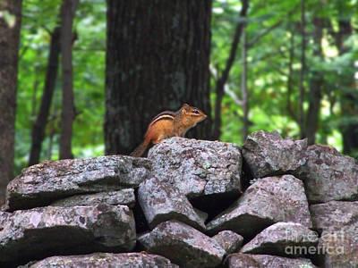 Photograph - Chipmunk On Rock Wall Photograph by Kristen Fox