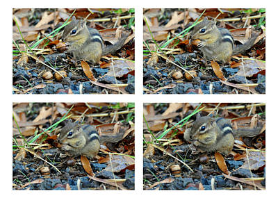 Chipmunk Photograph - Chipmunk Stuffing Pouches by Paul Lyndon Phillips