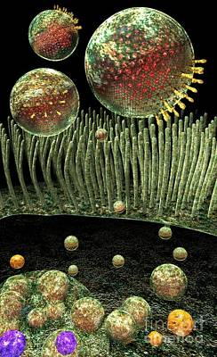 Digital Art - Chlamydia Replication by Russell Kightley