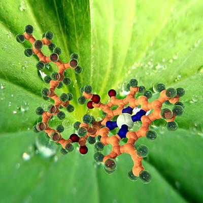 Chlorophyll Molecule Art Print by Phantatomix