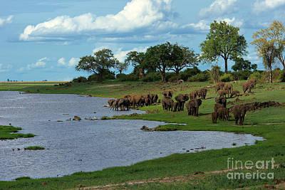Photograph - Chobe Landscape by Mareko Marciniak