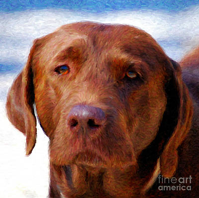 Photograph - Chocolate Lab  Dog  by Peggy Franz