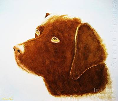 Painting - Chocolate Labrador  by Frances Ku