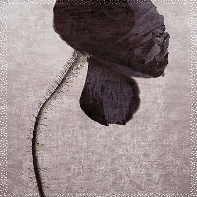 Chocolate Poppy Art Print by Bonnie Bruno