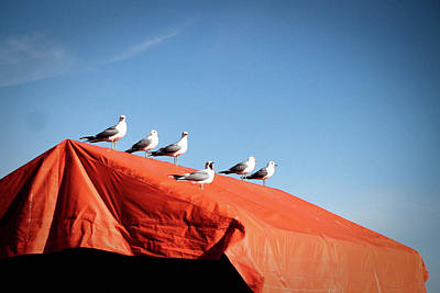 Helsinki Photograph - Choir Of Seagulls by Photography by Alan Leong. ShearNation.com