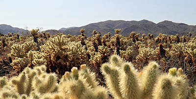 Photograph - Cholla Cactus Garden In Joshua Tree National Park by Pierre Leclerc Photography