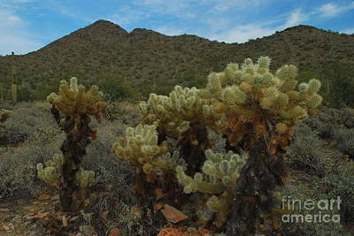 Photograph - Cholla On The Mountainside by Heather Kirk