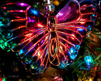 Photograph - Christmas Butterfly by Christopher Holmes
