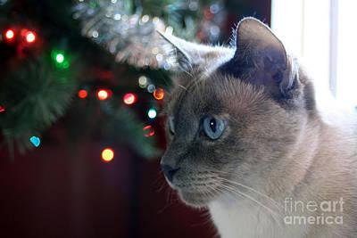 Photograph - Christmas Cat by Susan Stevenson