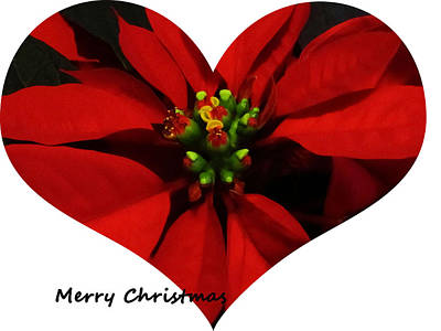 Christmas Greetings Print by Vijay Sharon Govender