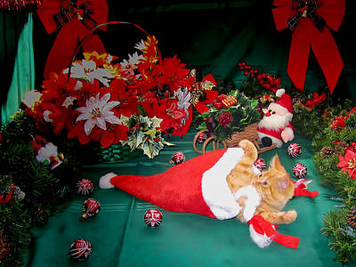 Christmas Kittens - Kitty Cat Chewing On Santa's Hat - Red Xmas Bows And Poinsettia Flower Basket Print by Chantal PhotoPix