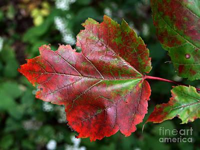 Photograph - Christmas Leaf Photograph by Kristen Fox