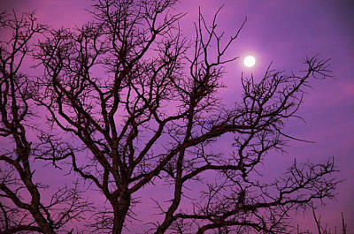 Christmas Morning Moon Art Print by Jeff R Clow