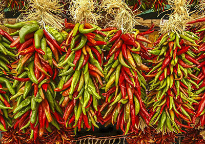 Photograph - Christmas Peppers by Lou  Novick