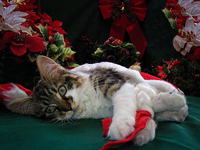 Christmas Scene W Kitten - Sleepy Kitty Cat W Paws Stretched Out Waiting For Santa Claus On Xmas Eve Art Print by Chantal PhotoPix