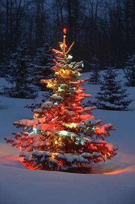 Christmas Tree With Lights Outdoors In Art Print by Carson Ganci