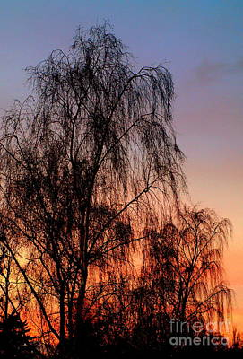Photograph - Christmas Willow by Michael Canning