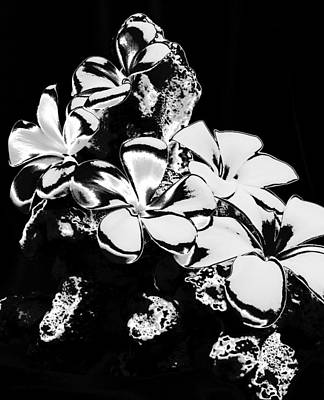Photograph - Chrome Plumeria by Elizabeth  Doran