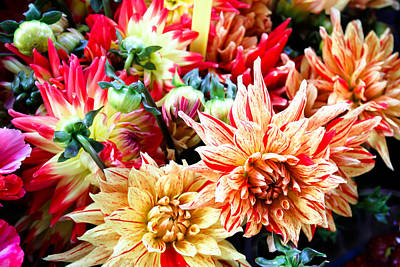 Chrysanthemum Blooms Art Print by Tony Grider